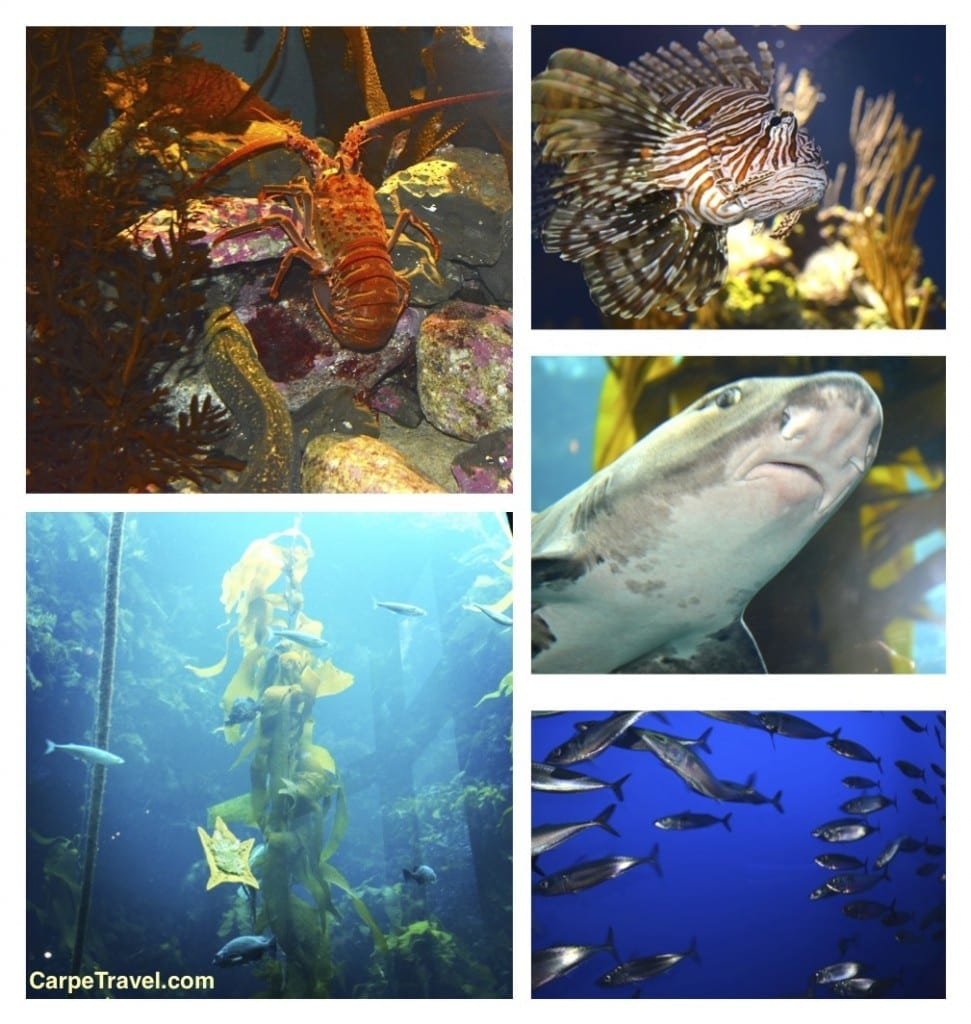 So much to see at the Monterey Bay Aquarium