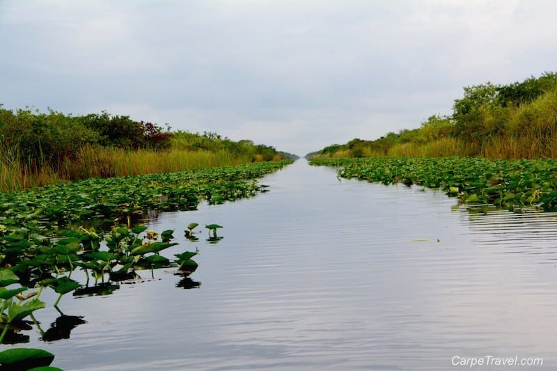 Things to do in Fort Lauderdale: Florida Everglades Airboat Tours with Everglades Holiday Park