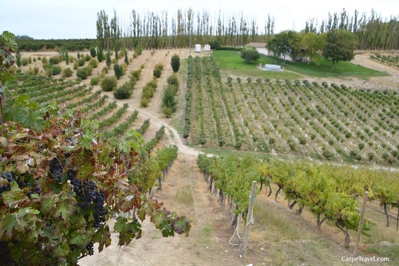 Winery Hotels in the United States: Bitner Vineyards in Idaho is an excellent choice.