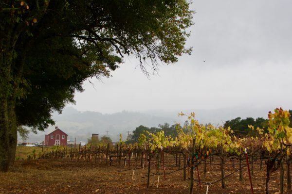 California Wine Travel Guides - Centeral Valley