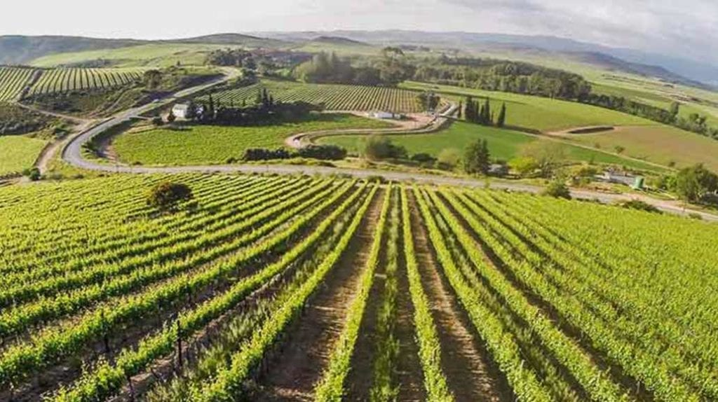 Delheim Wine Farm - One of the Top 10 Must Sip Cape Town Wineries