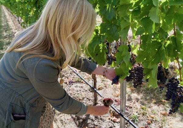 Best Wine Apps to Help Your Great GRAPE Escape