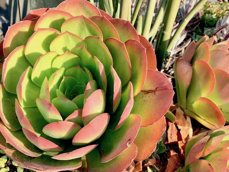 Things to do in Santa Barbara - Botanic Garden