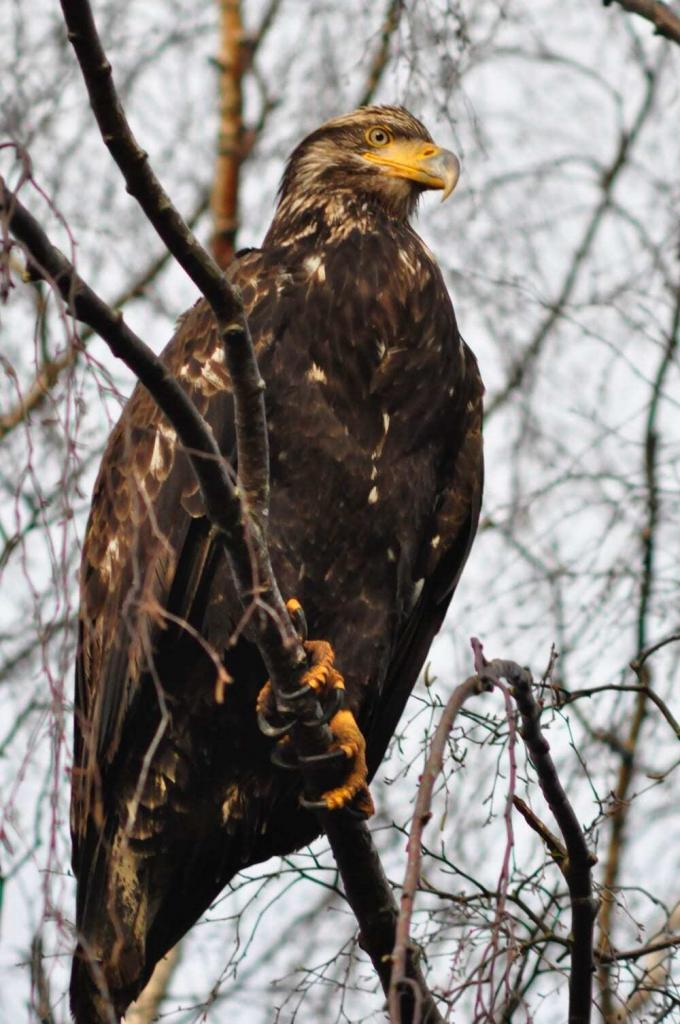 Spending a Morning at the Cascades Raptor Center is One of the Top 10 Things to do Willamette Valley Wine Country that go Beyond the Vines